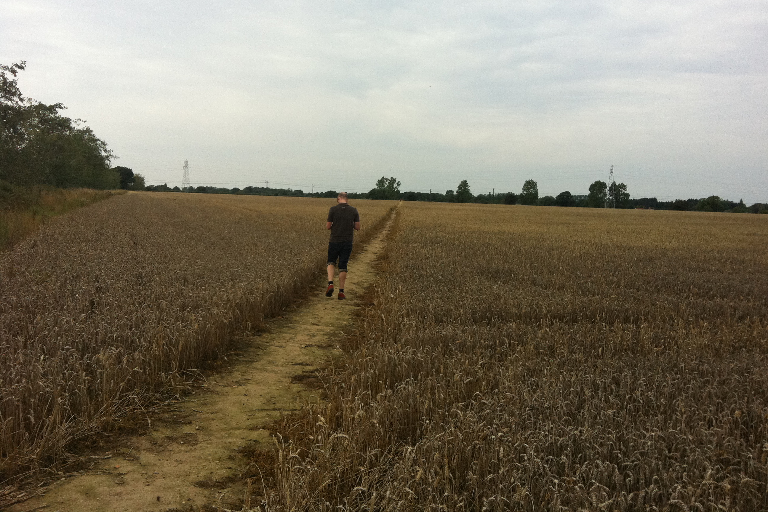 Fig 3 Cornfields